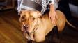 Rozchod v psí domácnosti: Tahanice o mazlíčky mohou skočit i u soudu