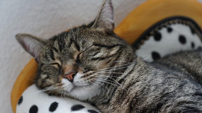 Jak vypadá ideální den šťastné kočky?