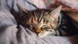 O čem sní kočky?