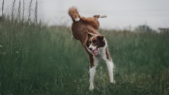 I psi mají svůj syndrom ADHD. Je podobný tomu lidskému