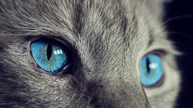Bakterie objevené u koček pomáhají léčit kožní infekce