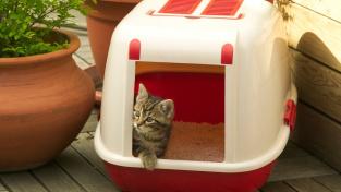 Proč si kočka někdy lehá do svého záchodku?