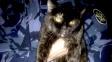 Černé kočky nenosí jen smůlu. Občas i drogy