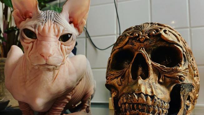 Kočky, které baví i děsí zároveň. Vypadají jako mimozemští zabijáci